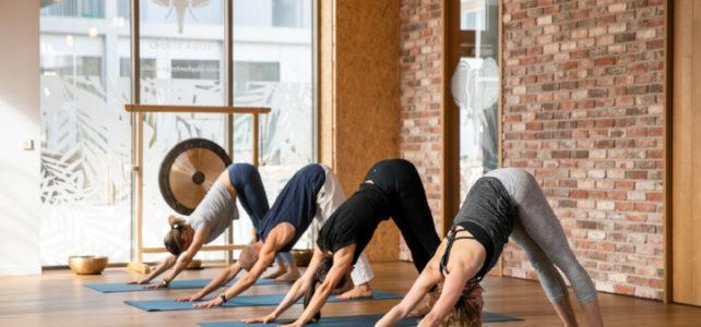 Du yoga sous toutes ses formes pour la rentrée !